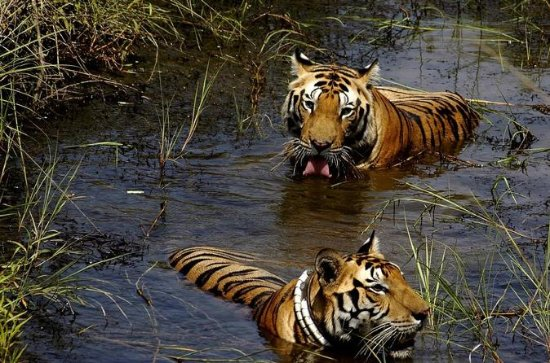 7-Day Wildlife Safaris in Central...
