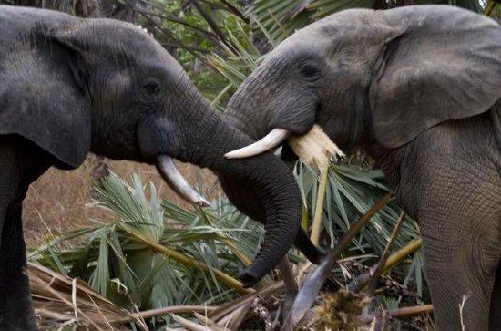9-daagse Best of African Wildlife ...
