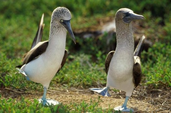 8-Day Tour of Quito and Galapagos...