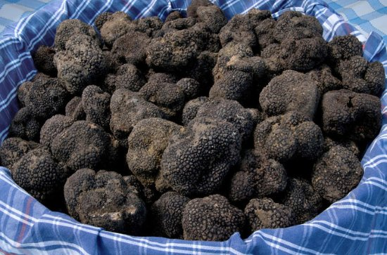 Tuscan Truffle-Hunting Experience