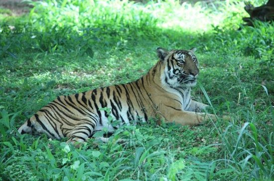 Bannerghatta National Park Private...
