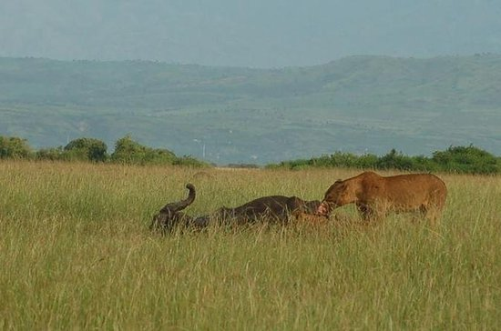 Safari de 7 nuits: Murchison Falls...