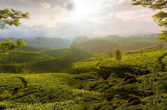 Tour privado de 3 días por Tea Valley...