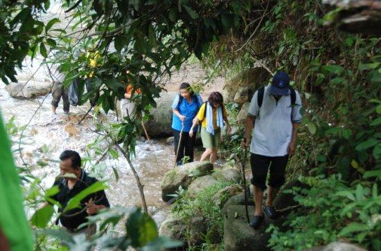 Full-Day Rainforest Adventure from...