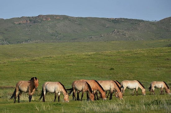 5 Nights Central Mongolia Highlight...