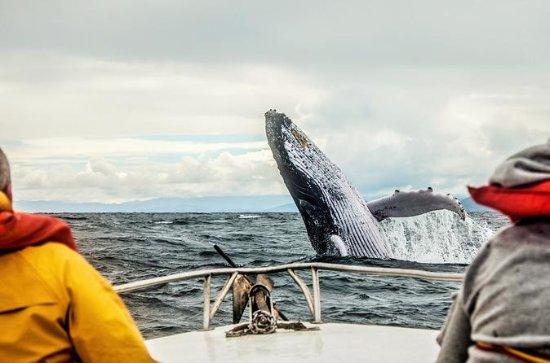 Circuit d'observation des baleines de plusieursjours à Québec et...