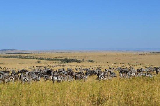 6-Night Masai Mara National Reserve...