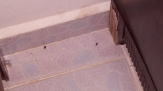 Pedasi Sports Club: Close up of bedroom bugs