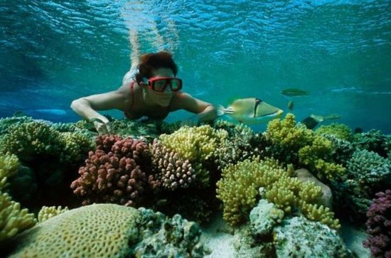 Snorkel Trip from Sharm El-Naga Bay ...