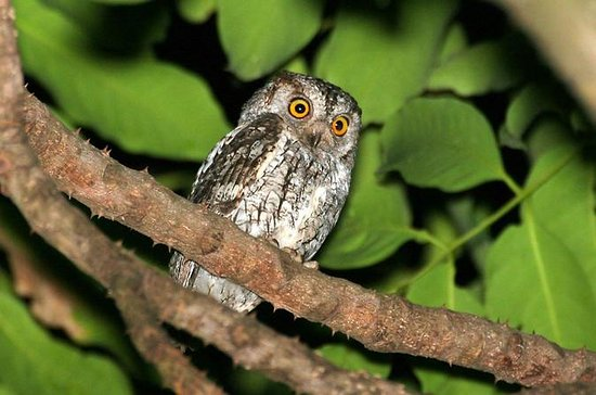 Full-Day Bird and Owl Watching Tour...