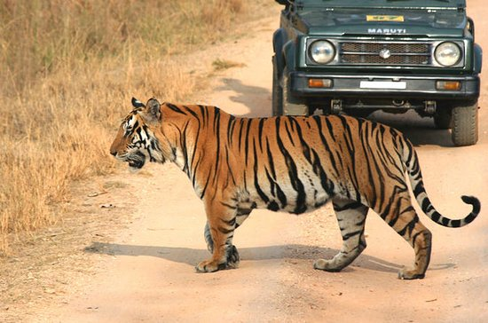 Private Tiger Safari to Panna...