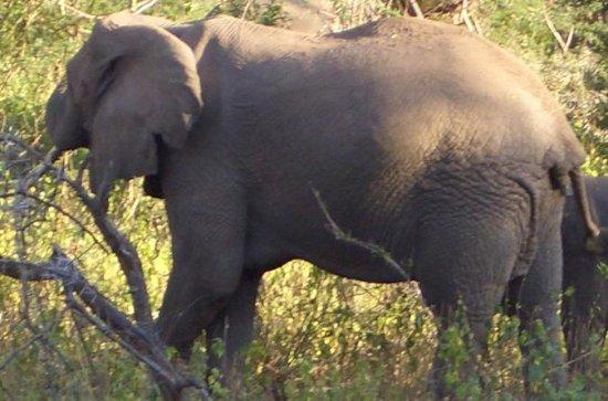 3-Night Safari from Nairobi: Lake...