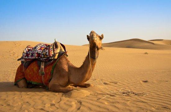 Desert Safari: Wahiba Sands and Wadi...