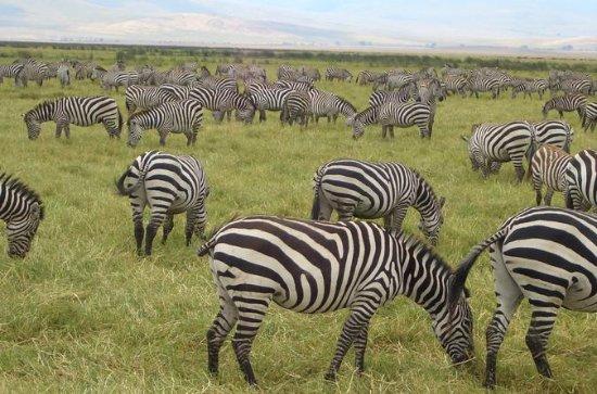 2-nat Masai Mara Safari fra Mombasa