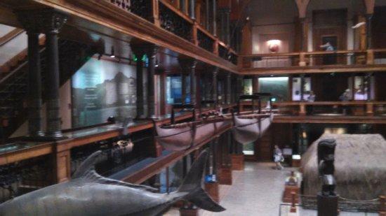 Bishop Museum: main hall display