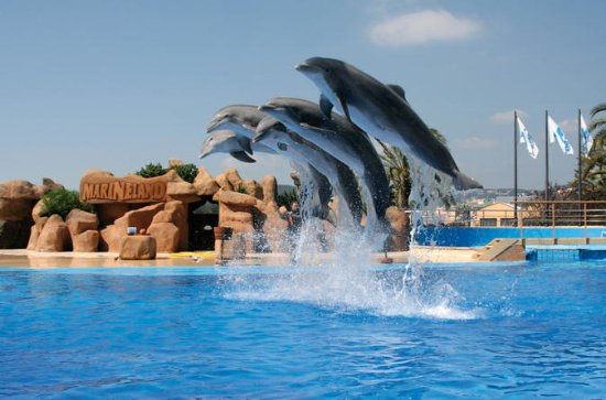 Marineland Dolphins Show and Water...