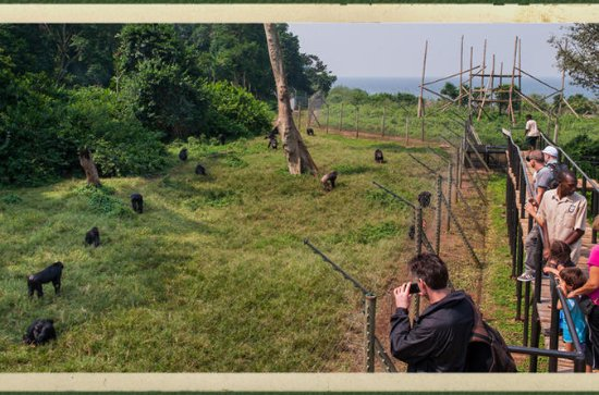 Ngamba Island Chimpanzee Sanctuary in ...