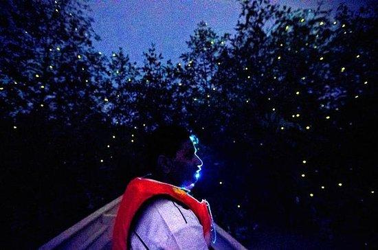 Kuala Selangor Firefly båttur ...