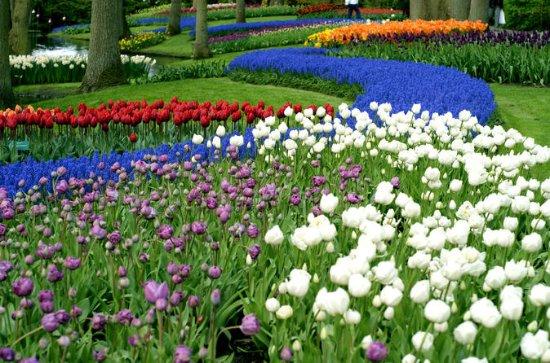 Halv-dag Keukenhof Gardens Tour fra...