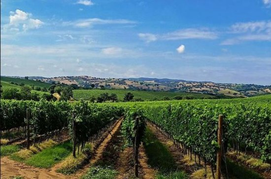 Sumadija Full Day Royal Wine Tour from...