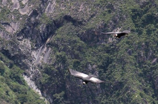 Observación de Chonta Condor, Tarawasi...