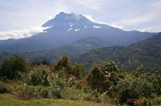 Kinabalu Park and Bamboo Spring Tour