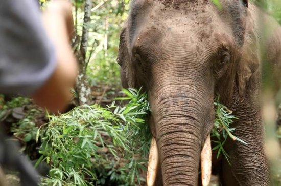 2-Day Kindred Spirit Elephant Sanctuary in Chiang Mai