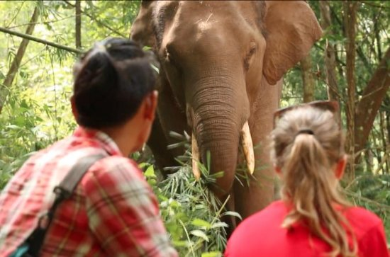 3-Day Kindred Spirit Elephant Sanctuary Chiang Mai