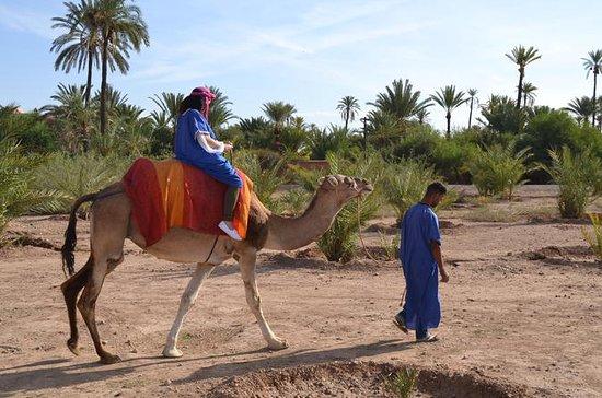Desert Camel Ride i Marrakech