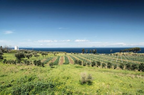 Private Wine Tour and Tasting from Taormina