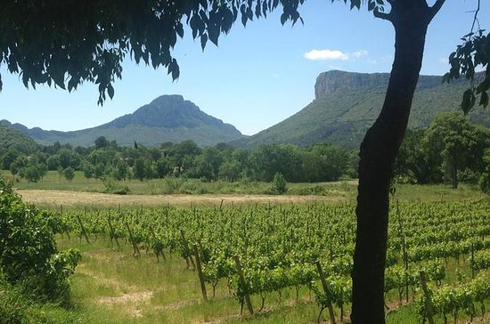 Pic St Loup Wine Tour including...