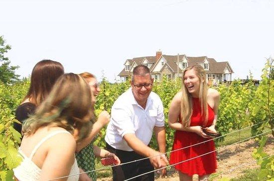 Degustación de vinos y maridaje Tour...