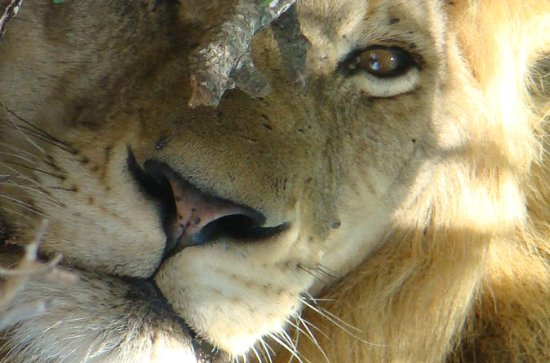 Kruger National Park Private Guided...