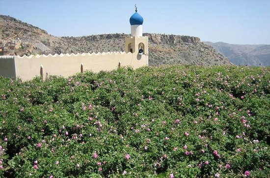 9-Hour Jabal Akhdar Green Mountains...