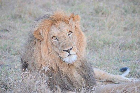 Half Day Nairobi National Park Tour...
