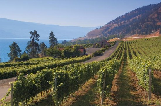 Summerland Full-day Wine Tour with...