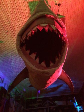 Mosman Park, Australia: shark