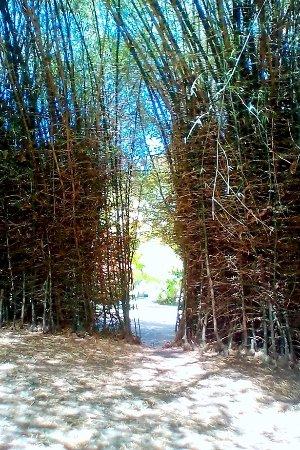 Roseau, Dominica: le salon de bambou