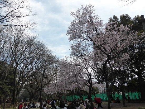 Zdjęcie Meguro