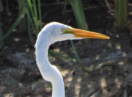 Parque Nacional Natural Tayrona: Neat bird!