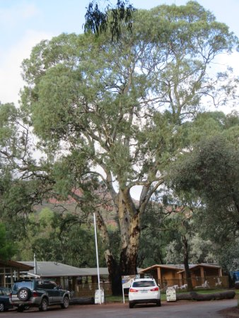 Flinders Ranges National Park, Australia: Welcome area and swimming pool.
