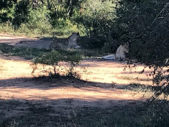 Частный заповедник Тимбавати, Южная Африка: photo0.jpg