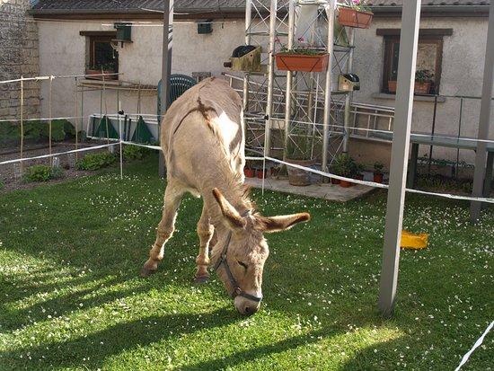 Les Petites-Loges, ฝรั่งเศส: on accueille même les ânes au Trilogis !