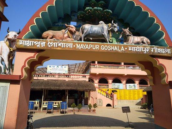 Mayapur Goshala - Picture of Sri Mayapur Chandrodaya Mandir, ISKCON