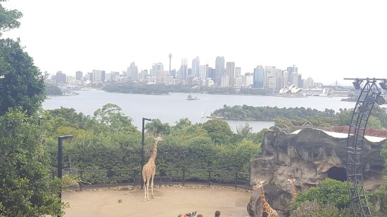 ‪‪Mosman‬, أستراليا: What a nice well run zoo. If you come to Sydney then make sure you Visit this zoo.‬