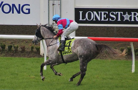 Pukekohe, New Zealand: Day at the races