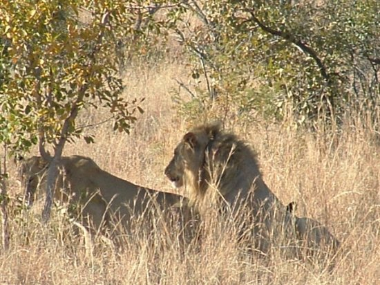 Pilanesberg National Park Picture