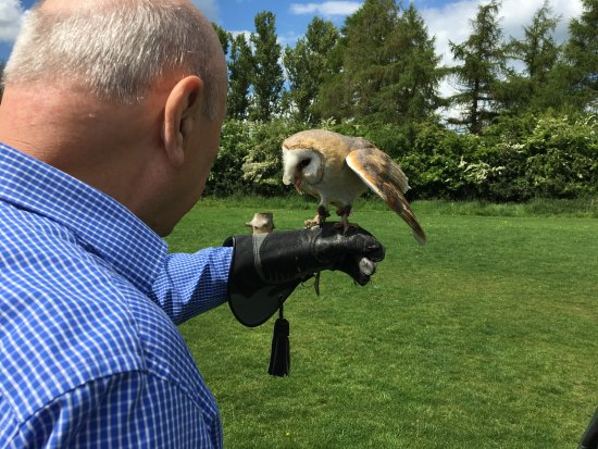 Huby, UK: Barn Owl