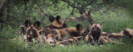 Marloth Park, Afrika Selatan: lazy days