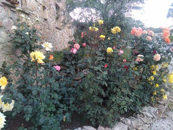 Massa Martana, Itália: fiori